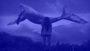 Mavi Balina oyunu için flaş gelişme: Tamamen suç sayılacak