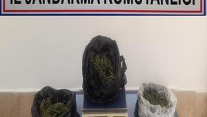 Uyuşturucuyla yakalanan çiftçi tutuklandı