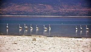 Burdur Gölünün son konukları flamingolar