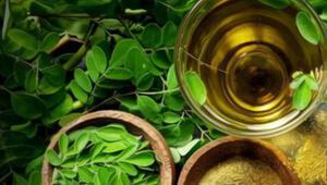 Moringa çayı nedir