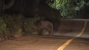 Gölcük Tabiat Parkında ayılara karşı önlem