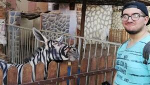 Zebra görünümlü eşek paylaşımı Mısırda viral oldu