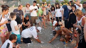 Denizle buluşan carettaları su altı fotoğrafçısı görüntüledi
