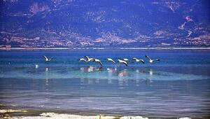 Burdur Gölü'nün son misafirleri