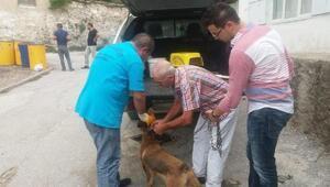Köpeğe şiddete 625 lira para cezası ve hayvan sahiplenme yasağı
