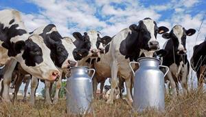 'Süt üreticileri mağdur edilmesin'