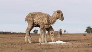 Avustralyanın en büyük nüfüsa sahip eyaletinin tamanında kuraklık hakim