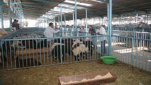 Hayvan pazarında durgunluk yaşanıyor