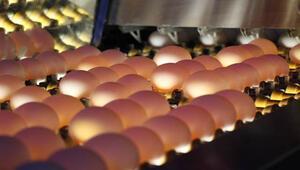 Yumurta fiyatı kimseyi memnun etmiyor