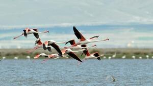 Yolumuz Flamingo yoludur