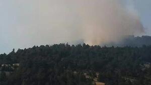 Bursanın Orhaneliilçesinde orman yangını