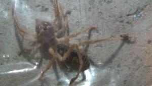 Prof. Dr. Selim Kurtoğlu: Türkiye'de et yiyen örümcek yok
