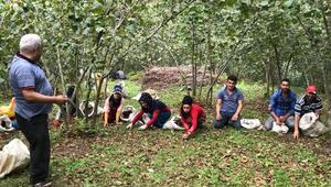 Mevsimlik fındık işçileri bahçede, çocukları yaz okulunda / Ek fotoğraf