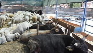 İzmirdeki kurban pazarlarında alıcılar bekleniyor