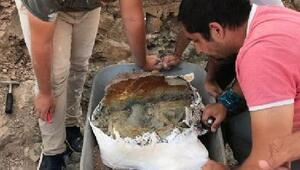Çankırıda gergedan kafatası fosili bulundu