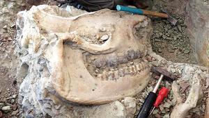 Çankırı'da 8.5 milyon yıllık gergedan