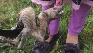 Köylüleri korkutan hayvan ölüsü ne olduğu ortaya çıktı