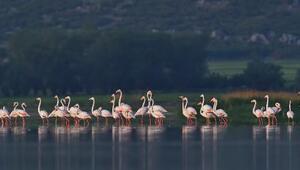 Mermer ocaklarının kaçırdığı flamingolar geri döndü