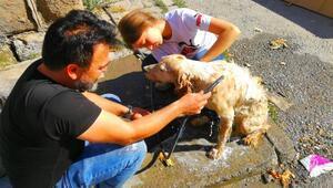 Sıcaktan bunalan köpeği yıkayarak serinlettiler