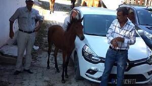 Yılkı atları, su içmek için köye indi
