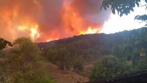 Kastamonuda orman yangını (2) - Yeniden