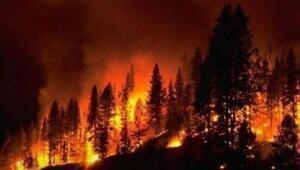 Kastamonuda korkutan orman yangını...