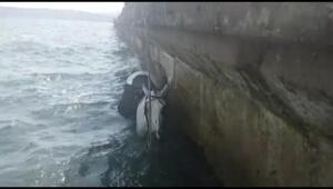 Sarıyerde bindiği at ile denize düştü (1)