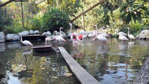 Fabrika içerisindeki dev hayvanat bahçesine ziyaretçi akını