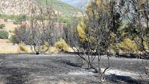 Sivastaki yangında 7 hektarlık orman yandı