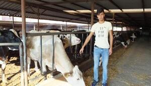 Fıskiyeyle serinleyen ineklerinin süt verimi arttı