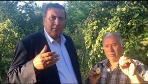 CHP'li Gürer: Akdeniz meyve sineği, Niğde çiftçisininkabusu oldu
