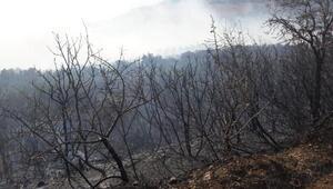 Erdekte çıkan yangın, 3 saatte kontrol altına alındı