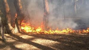 Milli parkta orman yangını