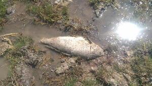 Uyuz Gölündeki balık ölümleri tedirgin etti