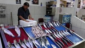 Av yasağı bitti; Trabzon'da palamut bolluğu yaşanıyor