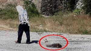 İnsanlık dışı olay Karayolunda böyle yakalandı