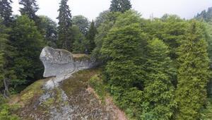 Ormanda fark edilen gemiye benzer kaya ilgi görüyor