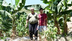 Anamur tarımı can buluyor