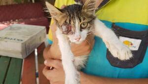 Sokak kedisinin görmeyen gözü için ameliyata alınacak