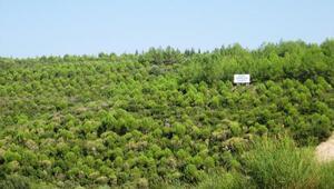Ege Orman Vakfının diktiği fidan sayısı 9 milyonu geçti