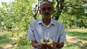 Üretici şokta, elmanın yüzde 80i zarar gördü