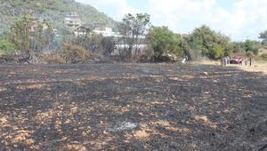 Meyve ağaçları yangında zarar gördü