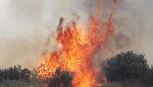 Makilik yangını büyümeden söndürüldü