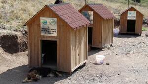 Mesut öğretmen, gönüllü baktığı hayvanlar için rehabilitasyon merkezi istiyor