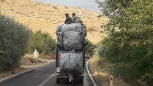 Atık kağıt toplayıcılarının tehlikeli yolculuğu