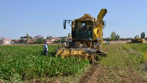 Sarıoğlanda şeker pancarı hasadı başladı