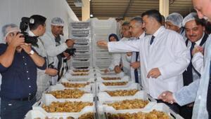 Bakan Pakdemirli, Aydında organik incir işleme tesisini gezdi