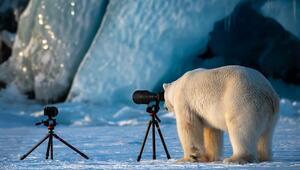Fotoğraf makinesini yerleştirdi, kutup ayısı geldi... Bu fotoğrafın ardından...