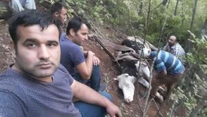 Bursada inek kurtarma operasyonu