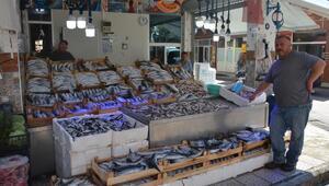 Karadenizde palamut bolluğu; fiyatı 5 liraya geriledi